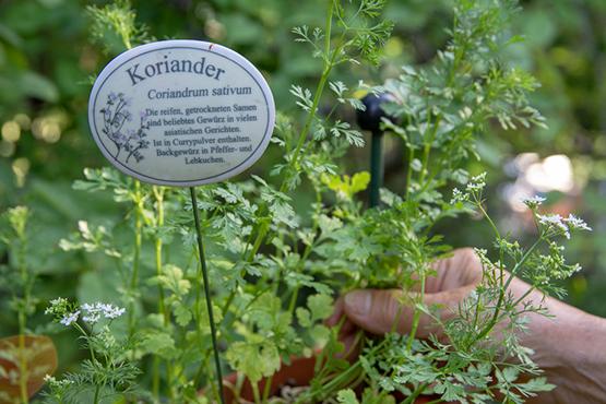 Kräuterkasten im KWA Stift Brunneck: von Bewohnern gepflegt und genutzt