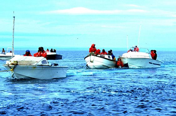 Inuit-Walflotte