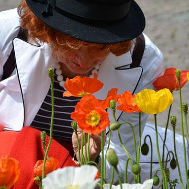 Zum Hinknien schön: orangefarben und gelb leuchtende Mohnblüten